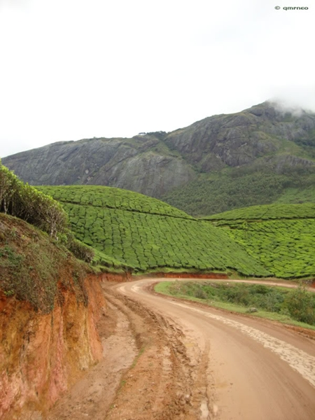 Munnar Tea Plantations mntravelog