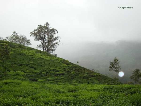 Photo Point Munnar mntravelog