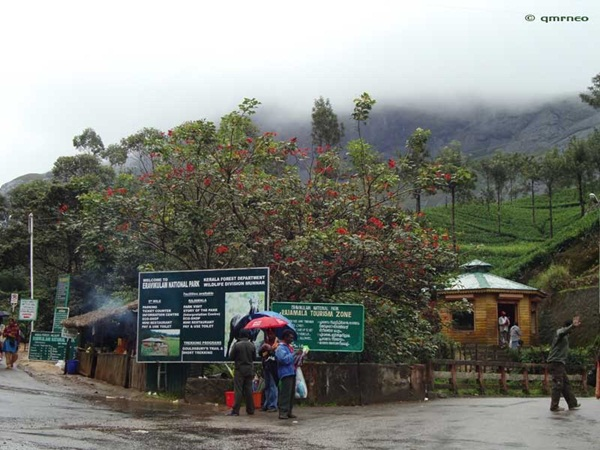 Eravikulum National Park Munnar mntravelog