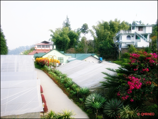 Pineview nursery view, kalimpong mntravelog