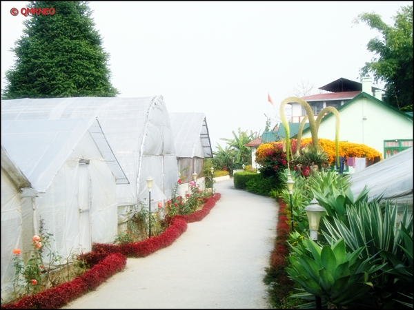 Pineview nursery, kalimpong mntravelog