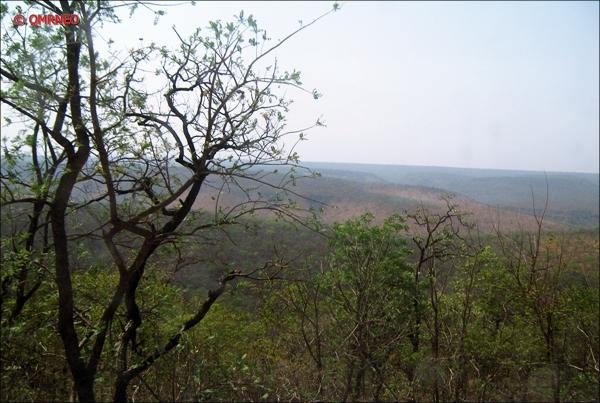 Jungle on way to Srisailam Temple, Andra Pradesh, India mntravelog