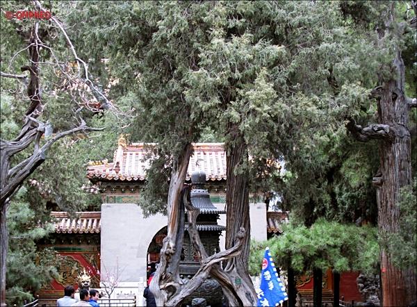 Branch Interlocked The Forbidden City Beijing China MN Travelogue