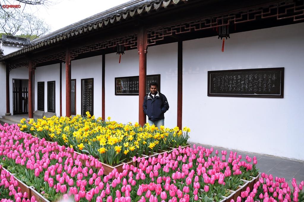 Tulip Garden Tiger Hill Suzhou Jiangsu China mntravelog