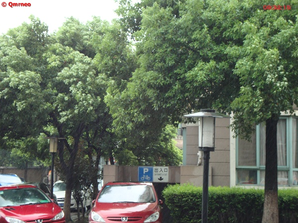Typhoon Muifa hit Shanghai_high speed winds parking_MNTravelog