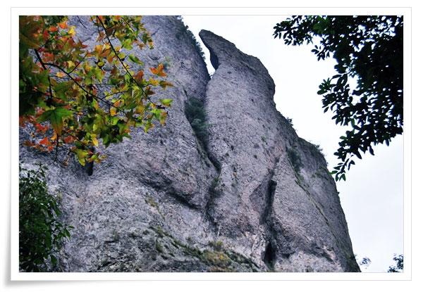 Bear-Climbing-on-Mountain,-YanDang-Mountain,-China,-MNTravelog