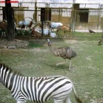 Herbivorous Animal, Shanghai Wild Animal Park MNTravelog