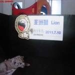 Lion Kinder garden, Shanghai Wild Animal park MNTravelog