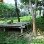 Lion, Shanghai Wild Animal Park MNTravelog