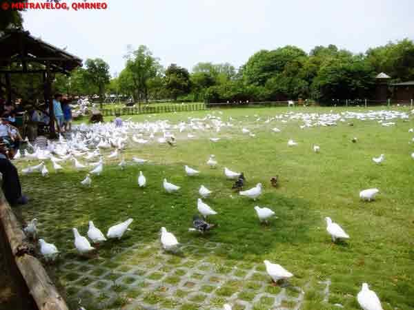 Pigeon Garden at SWAP, Shanghai Wild Animal park MNTravelog