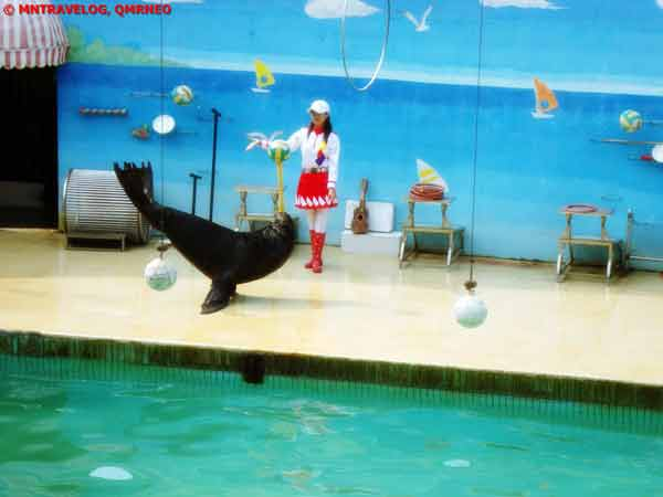 Sea Lion Show at Sea Lion Arena(Seal Playing), Shanghai Wild Animal Park MNTravelog