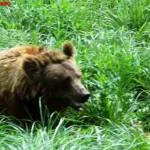 Wild Bear, Shanghai Wild Animal Park MNTravelog